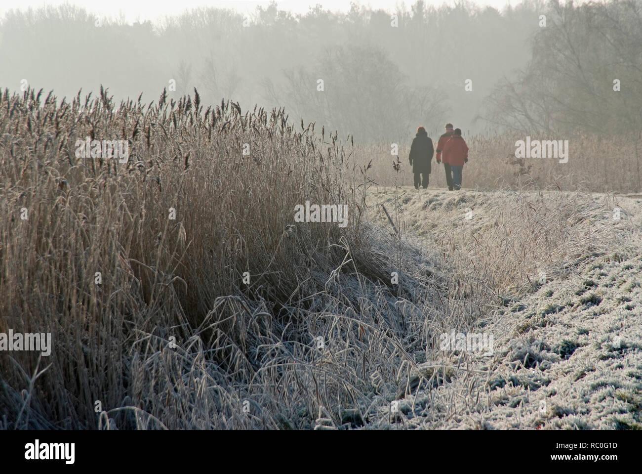 Menschen wandern auf dem Deich, Winterstimmung am Bodden, Born, Darss, Fischland-Darss-Zingst, Mecklenburg-Vorpommern, Deutschland, Europa | people wa - Stock Image
