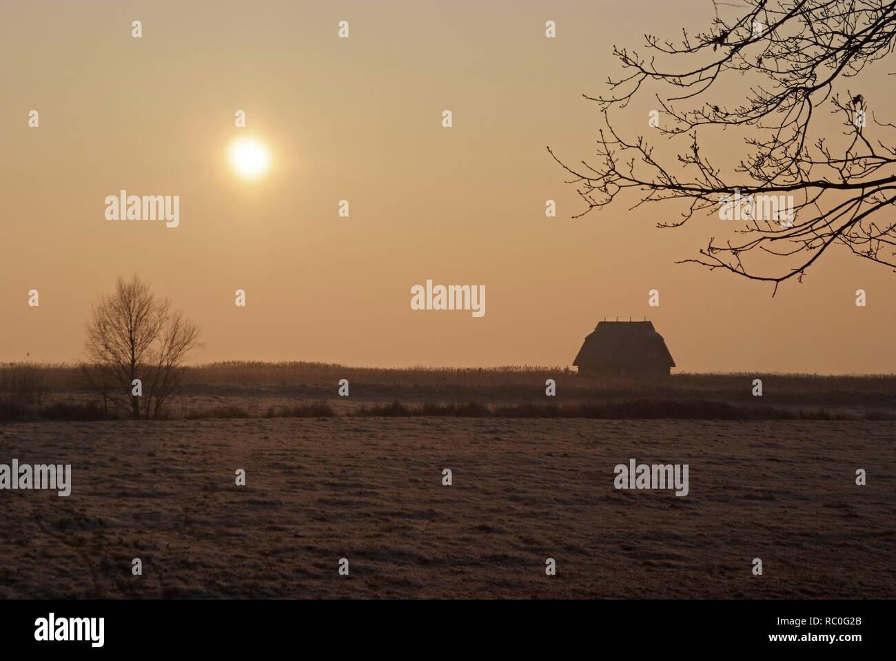Winterstimmung am Bodden, Born, Darss, Fischland-Darss-Zingst, Mecklenburg-Vorpommern, Deutschland, Europa | salt marsh side in winter, Born, Darss, F - Stock Image
