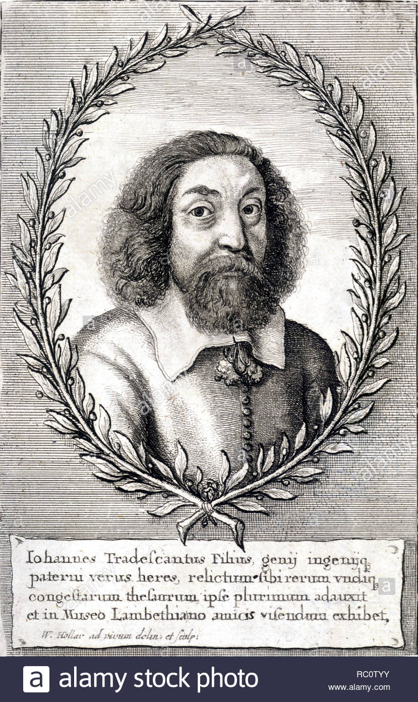 John Tradescant the Younger, 1608 – 1662, son of John Tradescant the elder, was a botanist and gardener, born in Meopham, Kent, and educated at The King's School, Canterbury, etching by Bohemian etcher Wenceslaus Hollar from 1600s - Stock Image