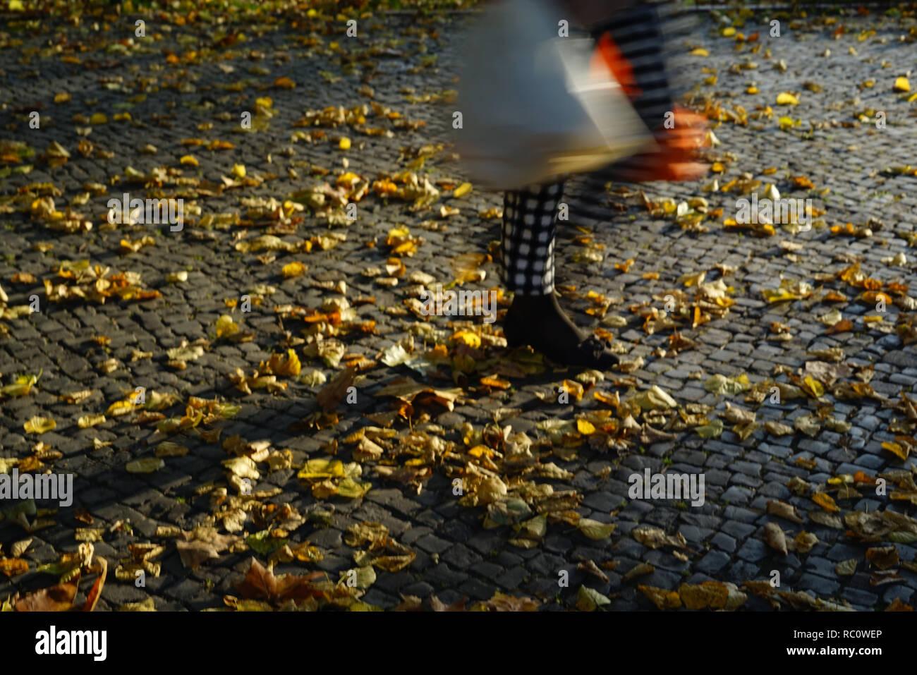 Berlin Savignyplatz Herbst Tiergarten Herbst - Stock Image