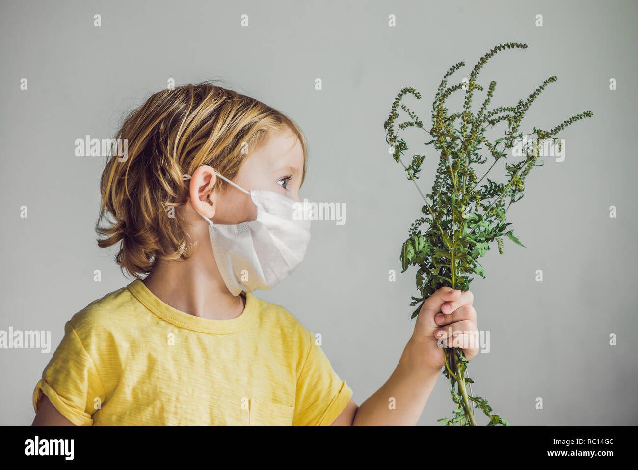 The boy is allergic to ragweed. In a medical mask, he holds a ragweed bush in his hands. Allergy to ambrosia concept. Stock Photo