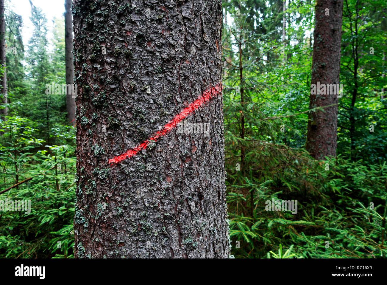markierter Baumstamm zur Baumfällung - Stock Image