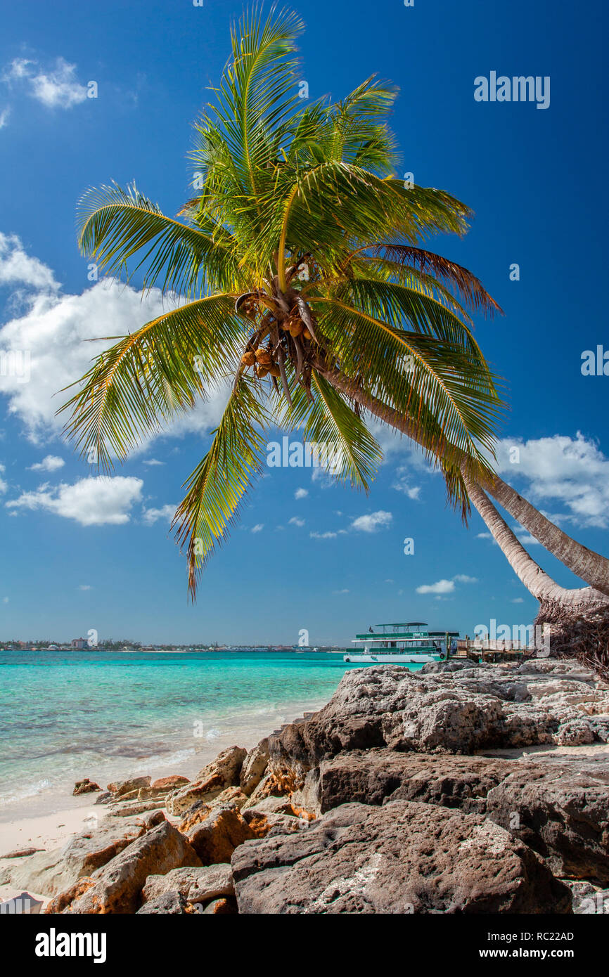 Tropical Island In Bahamas View On The Beach With Palm Tree Vacation Destination Stock Photo Alamy