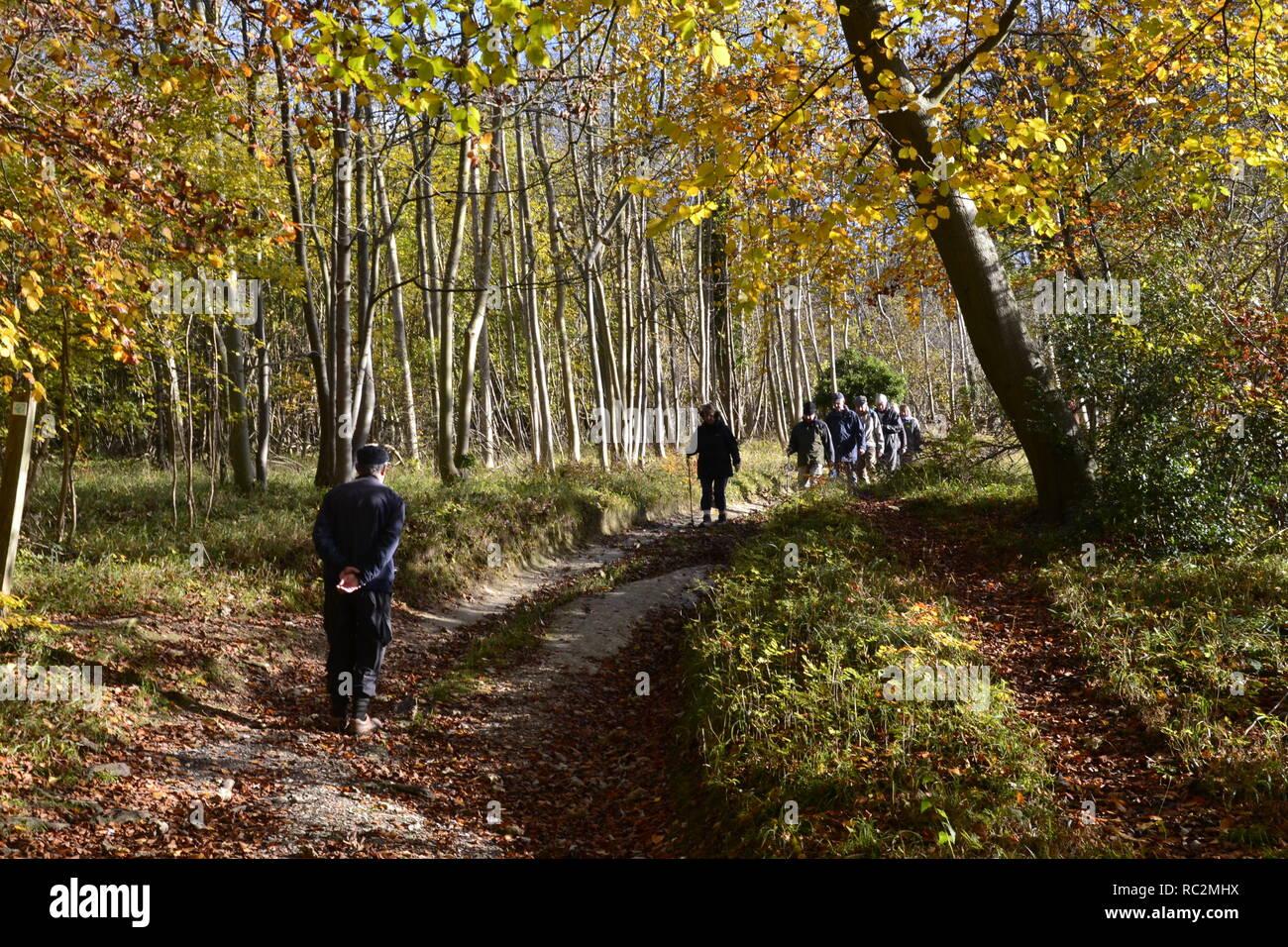 Walkers in Bradenham Woods, at Bradenham, High Wycombe, Buckinghamshire, UK - Stock Image