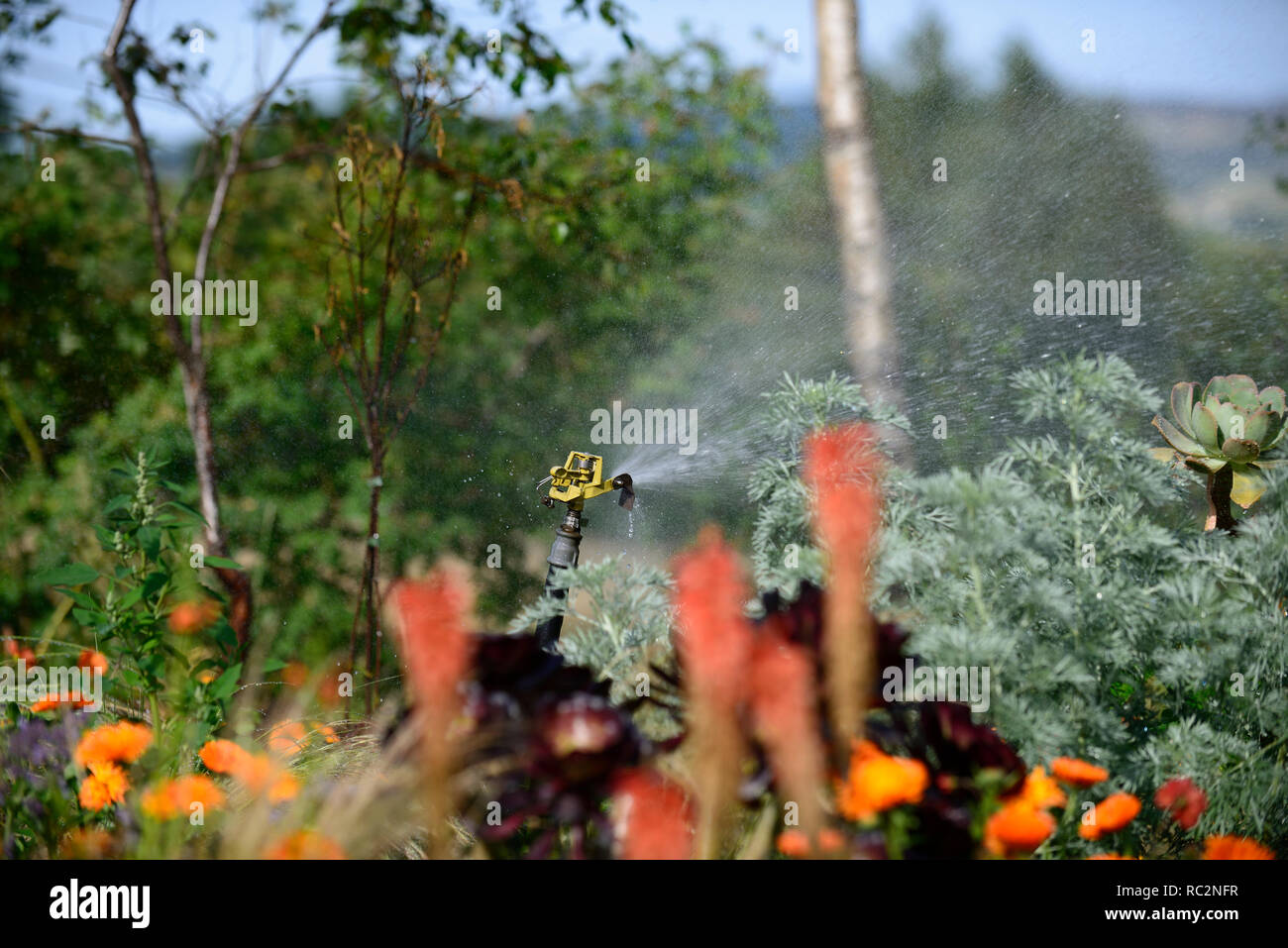 garden sprinkler,water,watering the garden,summer,hot dry weather,water conservation,gardens,gardening,RM Floral - Stock Image