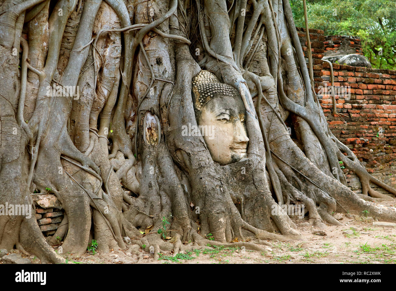 Head of the Buddha Image in the Bodhi Tree Roots, Wat Mahathat Ancient Temple, Ayutthaya Historical Park, Archaeological site in Thailand Stock Photo