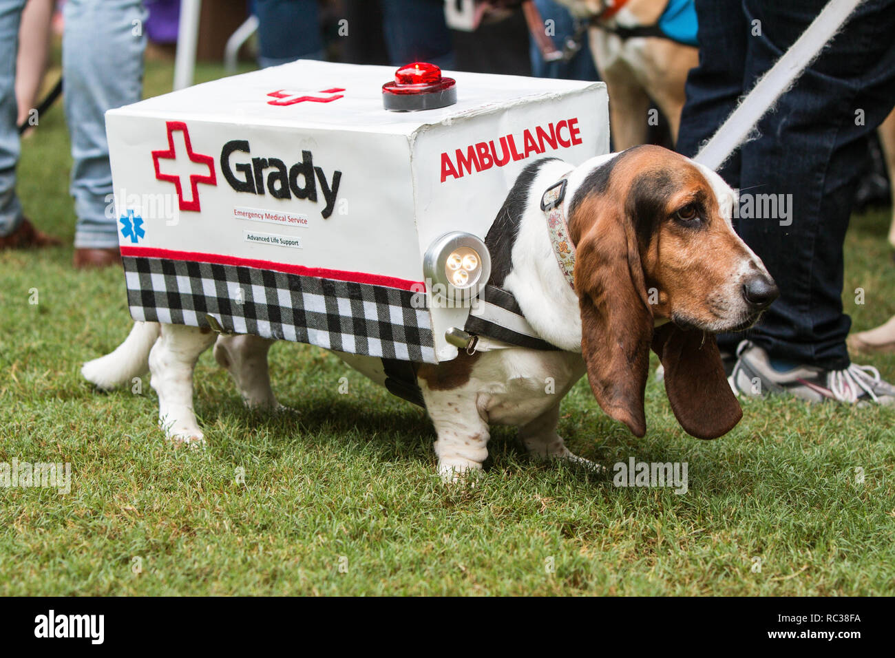A cute basset hound wears an ambulance costume with flashing lights at Doggy Con, a dog costume contest on August 18, 2018 in Atlanta, GA. - Stock Image