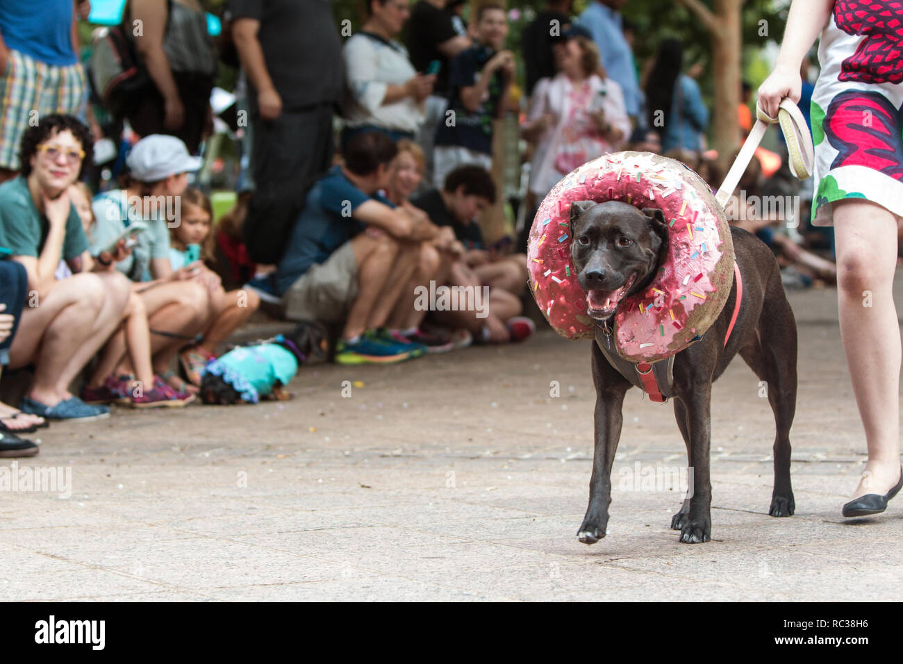 A dog wearing a doughnut costume around his head walks in front of a crowd of spectators at Doggy Con, a dog costume contest in Atlanta, GA. - Stock Image