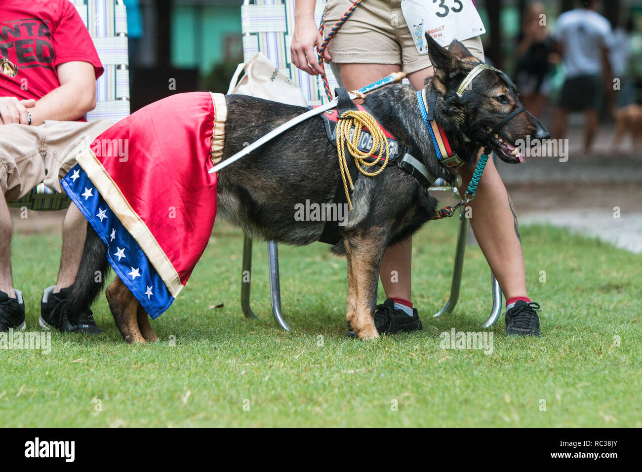 A dog wears a Wonder Woman costume at Doggy Con, a dog costume contest in Woodruff Park on August 18, 2018 in Atlanta, GA. - Stock Image