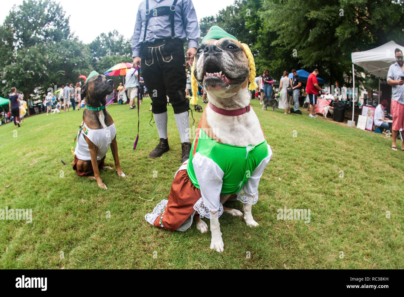 Two dogs wear bavarian costumes as their owner wears lederhosen, at Doggy Con, a dog costume contest in Woodruff Park on August 18, 2018 in Atlanta. - Stock Image