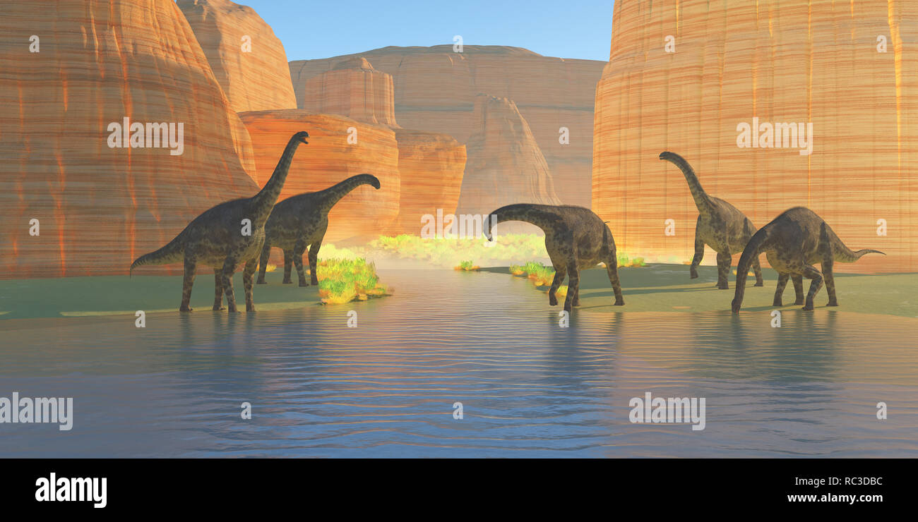 Cetiosaurus Canyon River - A herd of Cetiosaurus dinosaurs drink from a canyon river during the Jurassic Period of Morocco, Africa. - Stock Image