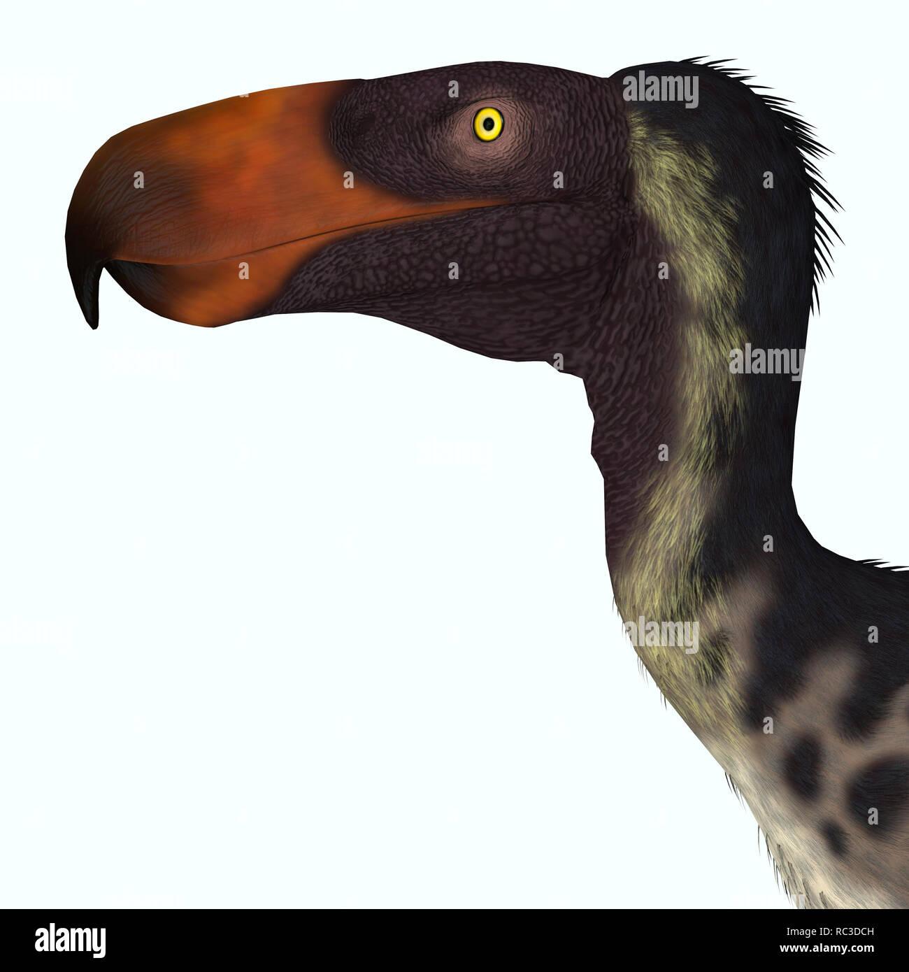 Kelenken Bird - Kelenken was a carnivorous 'Terror bird' that lived in Argentina during the Miocene Period. - Stock Image