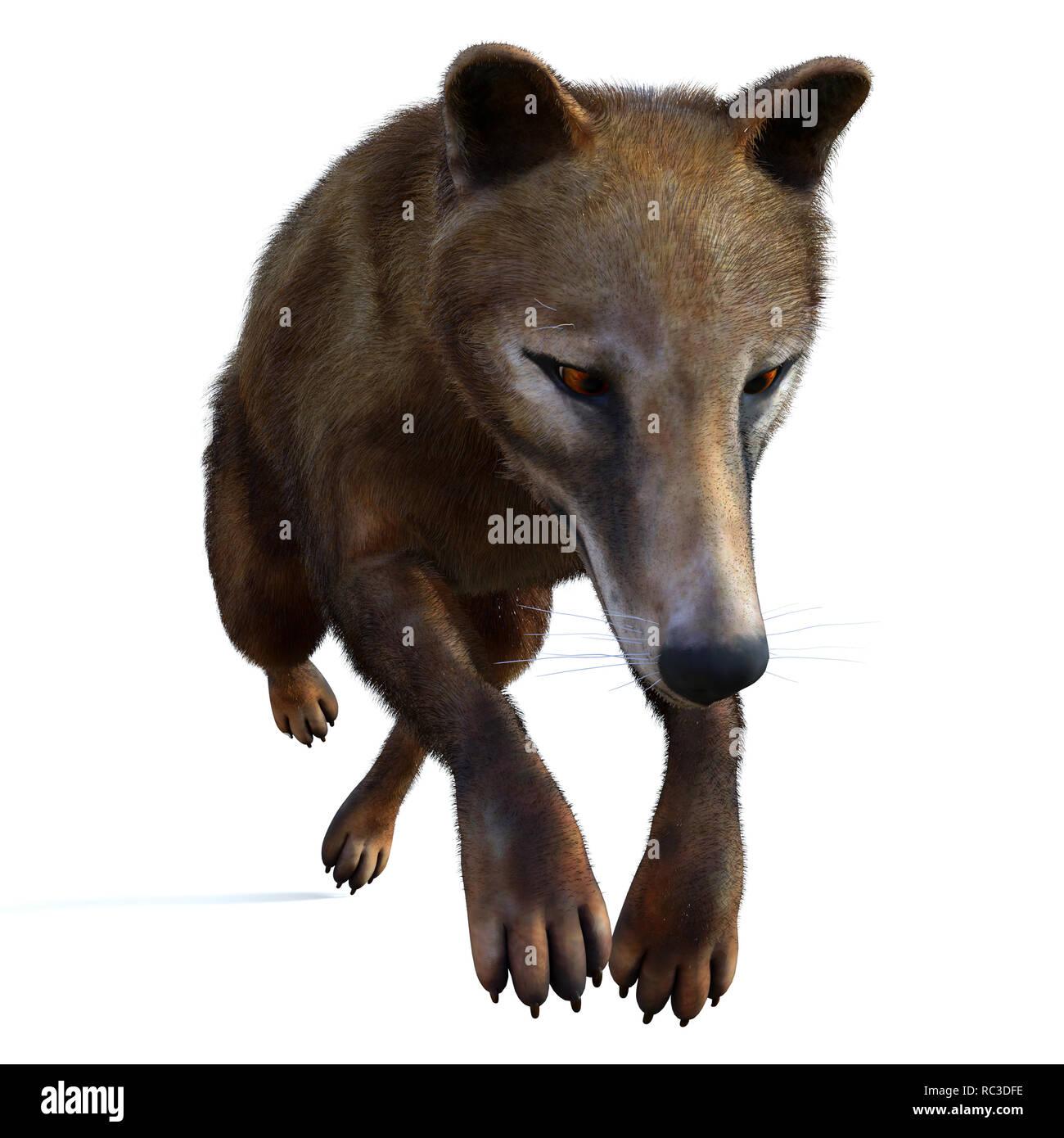 Thylacine Marsupial - The Thylacine marsupial was an extinct predator from the Holocene Period of Australia, Tasmania, and New Guinea. - Stock Image