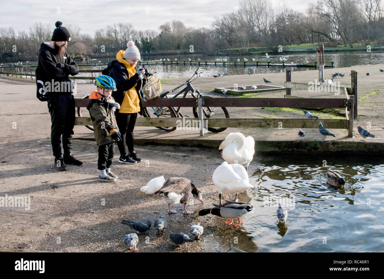 Couple and young boy feeding and photographing Swans on Stanley Park lake Blackpool Lancashire England UK Stock Photo