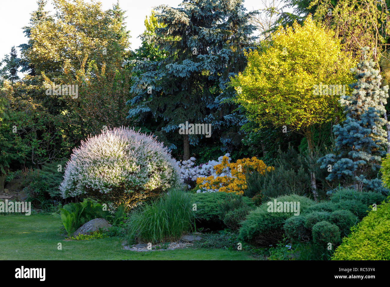 Beautiful Spring Garden With Ornamental Conifers Evergreen