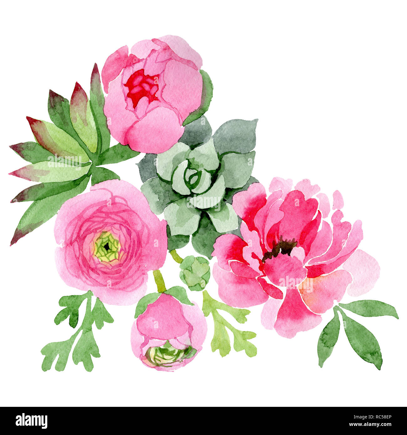 Pink Ranunculus And Peony Floral Botanical Flower Watercolor Background Set Isolated Bouquet Illustration Element Stock Photo Alamy