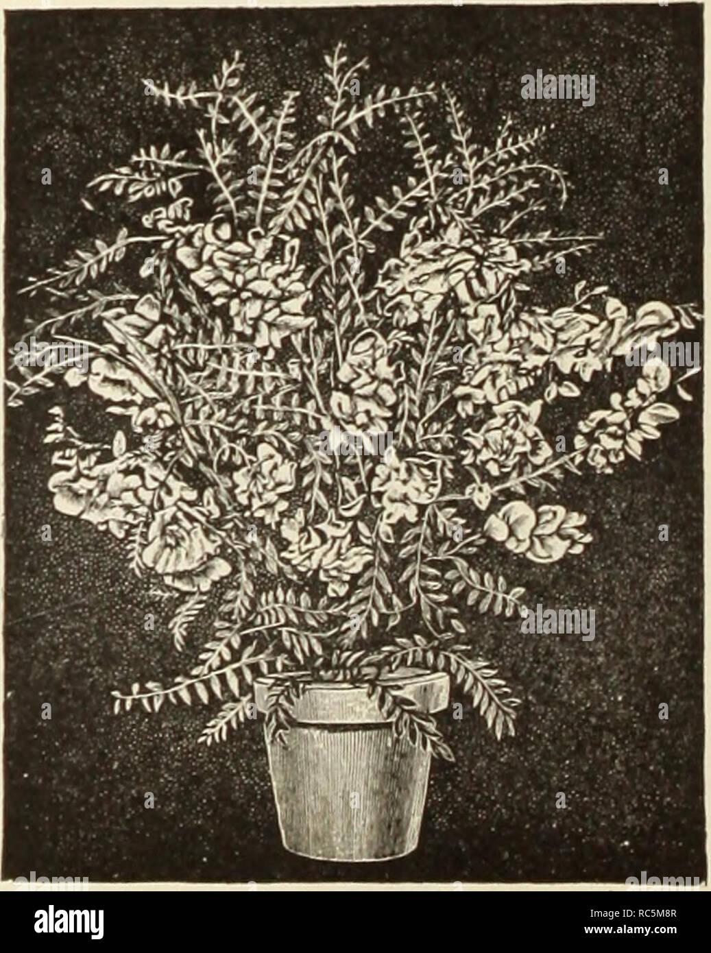Dreer's mid-summer catalogue 1913  Flowers Seeds Catalogs