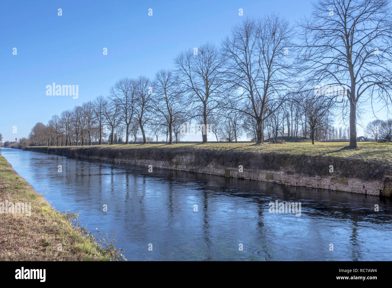 view of bare huge trees row on embankment of artificial historic canal, shot in winter bright light at Robecco sul Naviglio, Milan, Lombardy, Italy Stock Photo