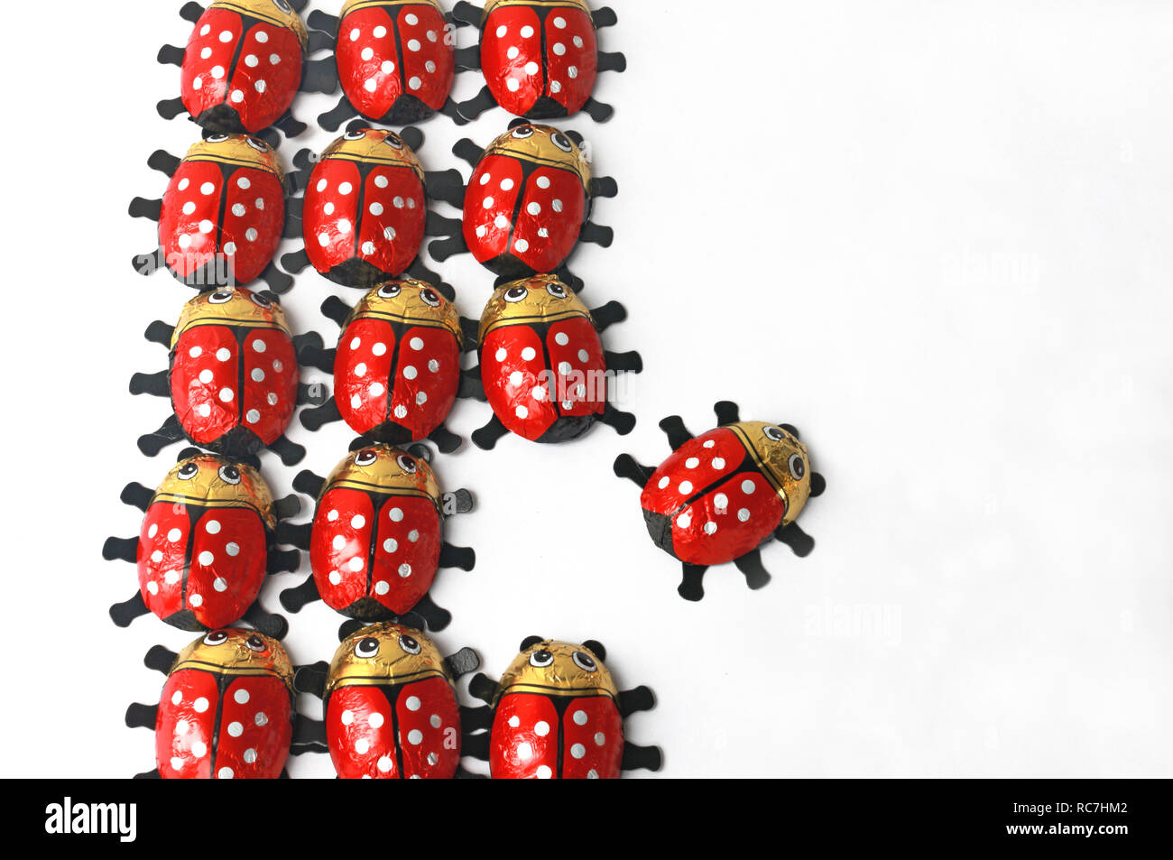 breaking new grounds, ladybug leaves its community and chooses a new path Stock Photo