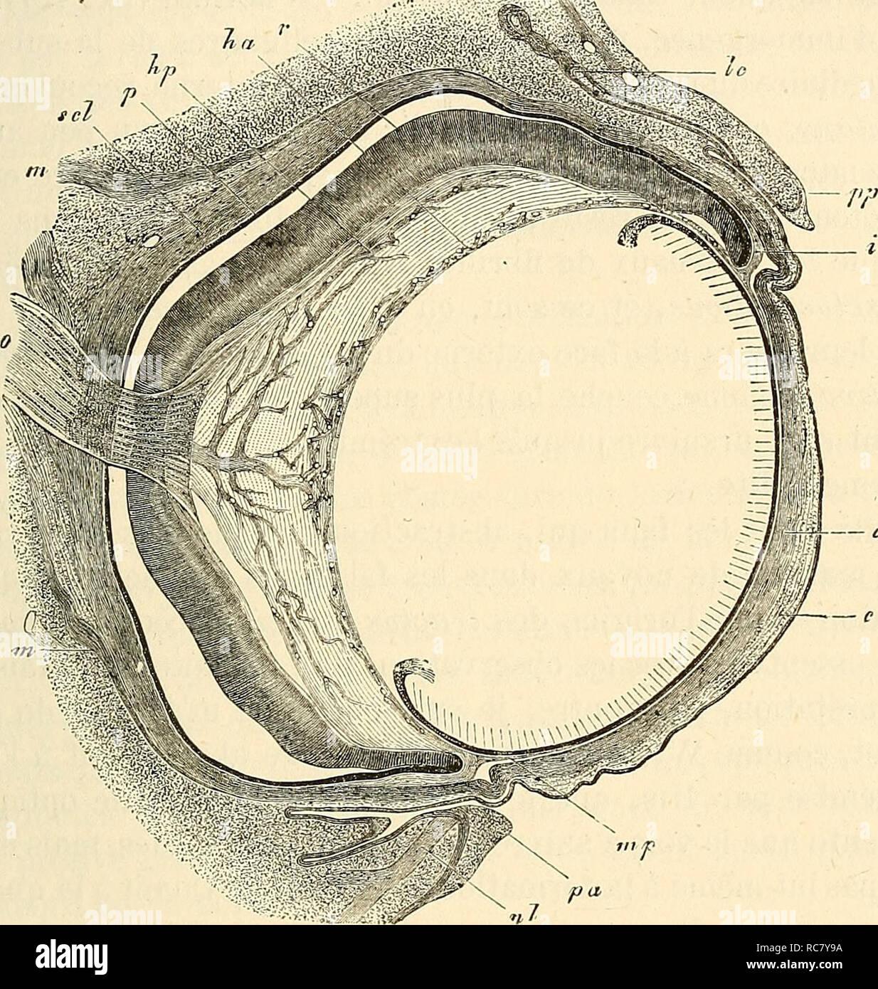 . Embryologie, ou, Traité complet du développement de l'homme et des animaux supérieurs. Embryology; Embryology. RETINE. 713 médiocrement épaisse de cellules mésodermiques plates, en couches concentriques avec de la substance intermédiaire, et à l'intérieur des éléments cellulaires disposés radiairement et unis entre eux de manière à former un treillis délicat dont les lacunes sont dirigées longitudinalement. Dans les lacunes de ce treillis il y a, d'une part, un grand nombre de petits faisceaux épais de 7 à 15 ;j. de fibrilles. Fie;. 127. nerveuses optiques des plus fines, sans Stock Photo