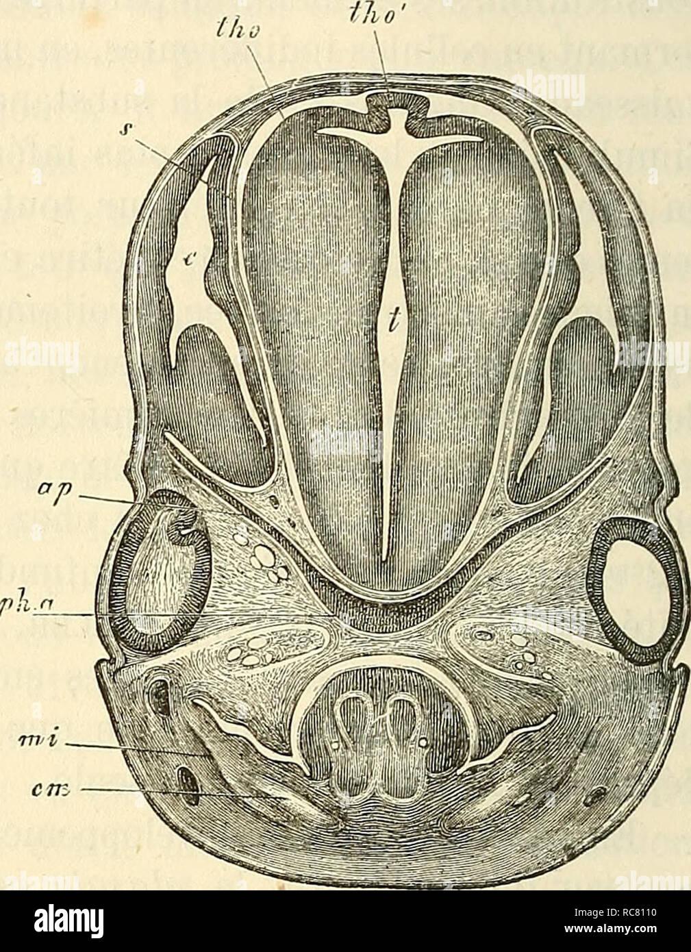 the latest 88aa1 8dc28 Embryologie, ou, Traité complet du développement de l ...
