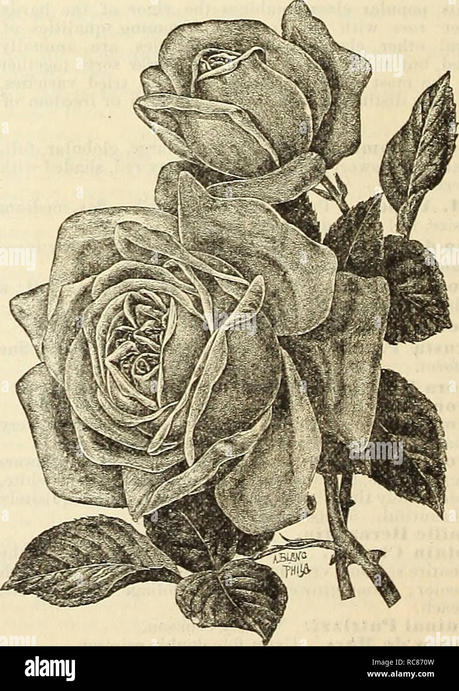 Dreer's garden calendar : 1886  Seeds Catalogs