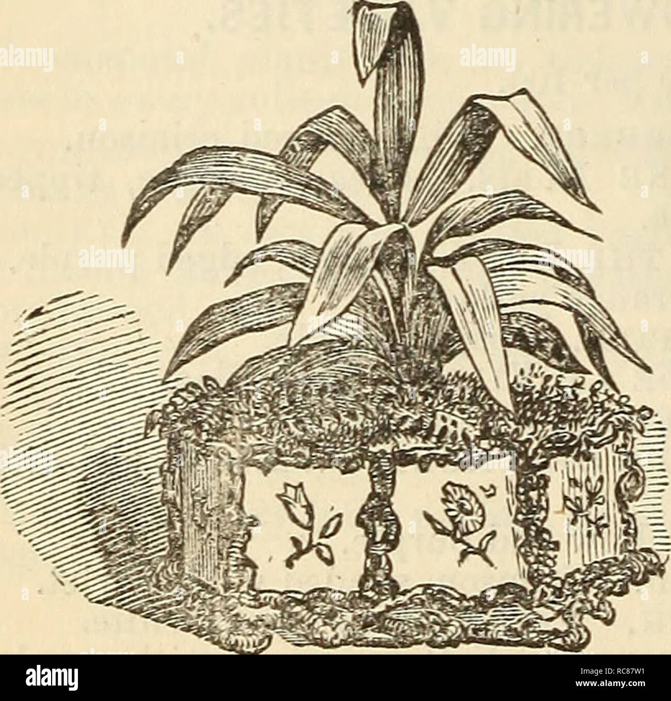 8365a5fc3e Dreers garden calendar seeds catalogs nursery stock catalogs gardening  catalogs jpg 1300x1358 Amber sym bra