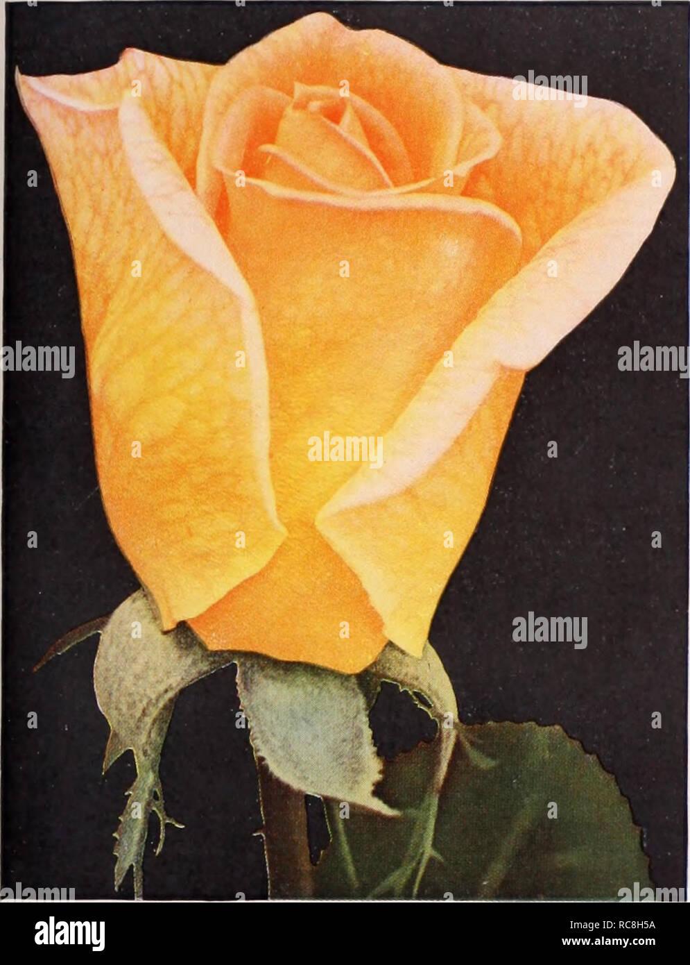 Dreer's garden book / Henry A  Dreer   Nursery Catalogue  L