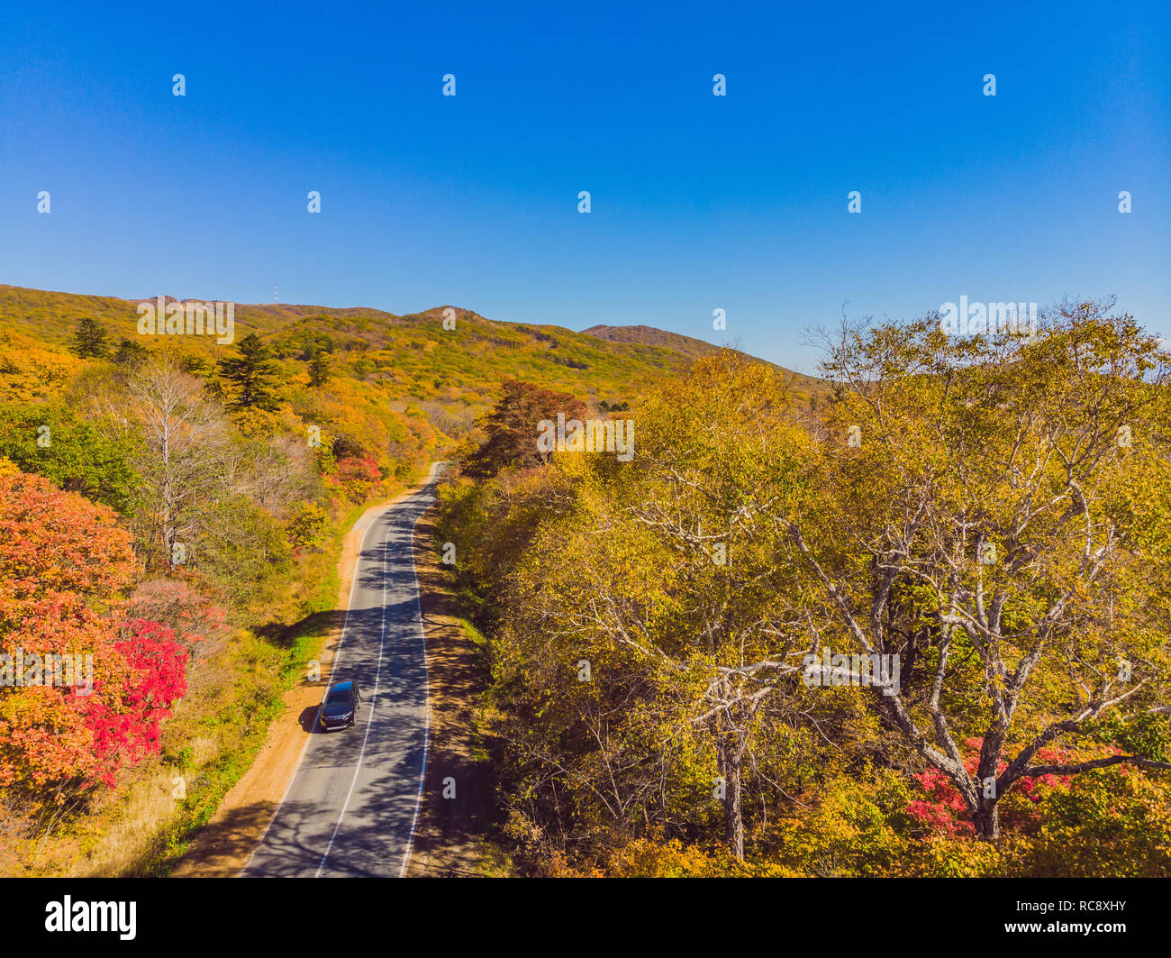 Aerial view of road in beautiful autumn forest at sunset. Beautiful landscape with empty rural road, trees with red and orange leaves. Highway through the park. Top view from flying drone. Nature Stock Photo