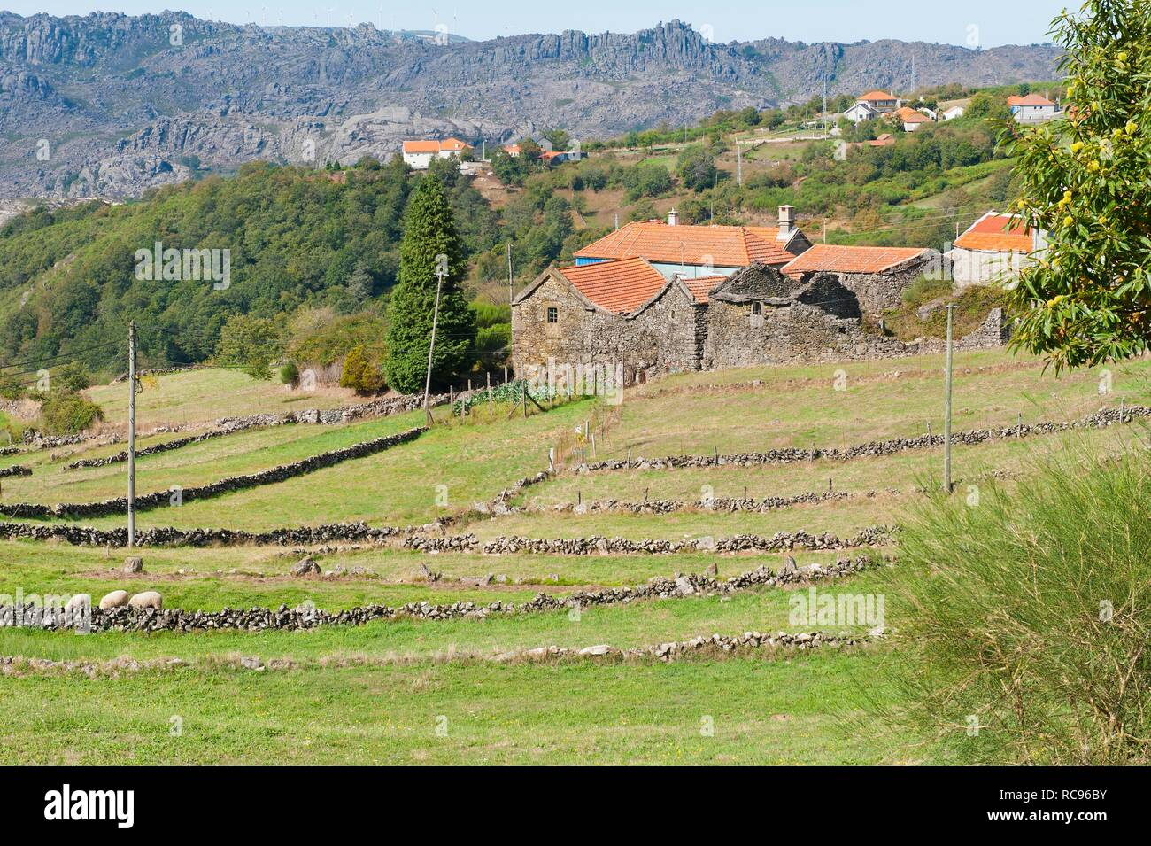Landscape with stonewalls, Peneda Geres National Park, Minho province, Portugal, Europe - Stock Image