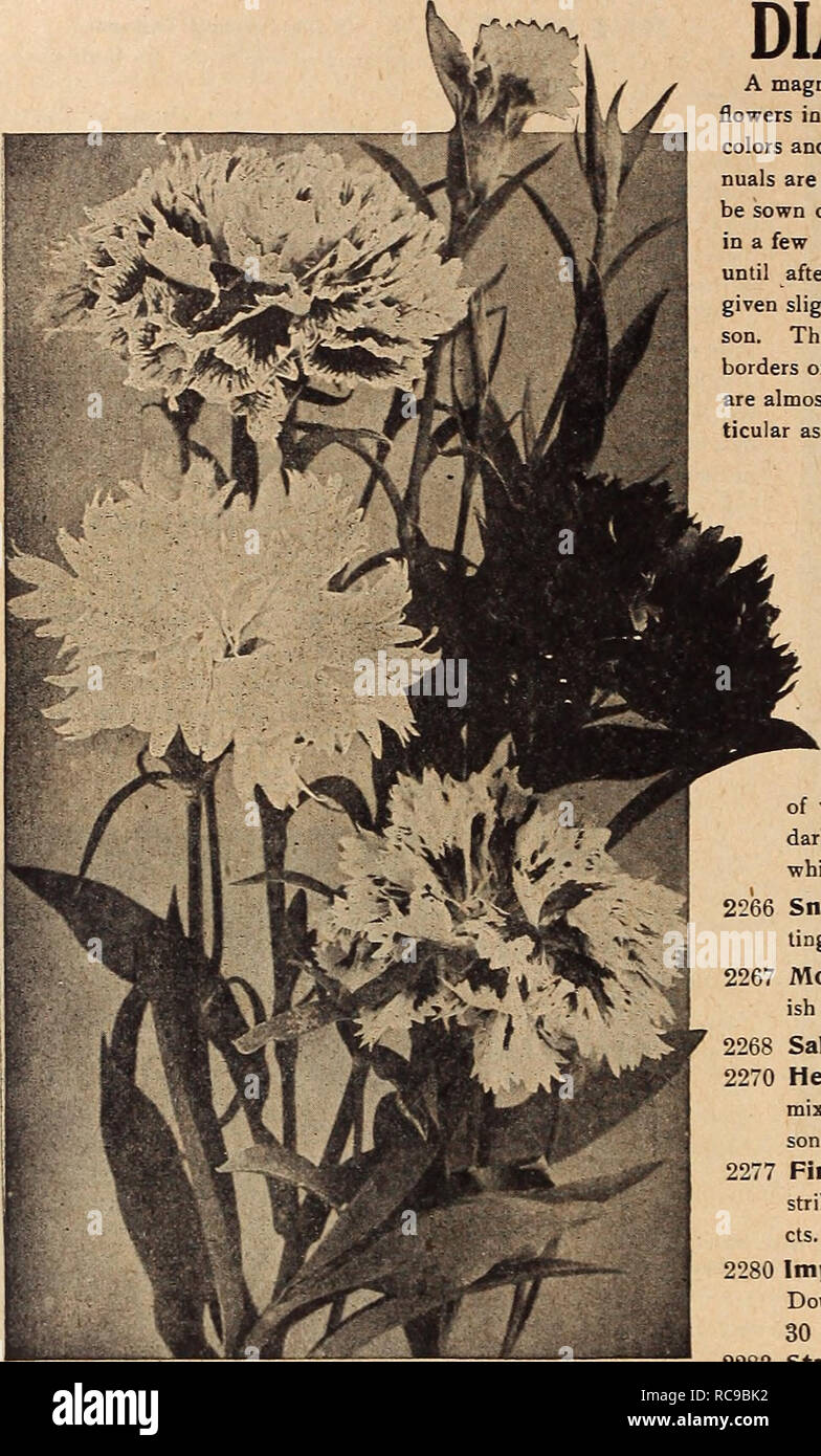 Dreer's garden book 1920  Seeds Catalogs