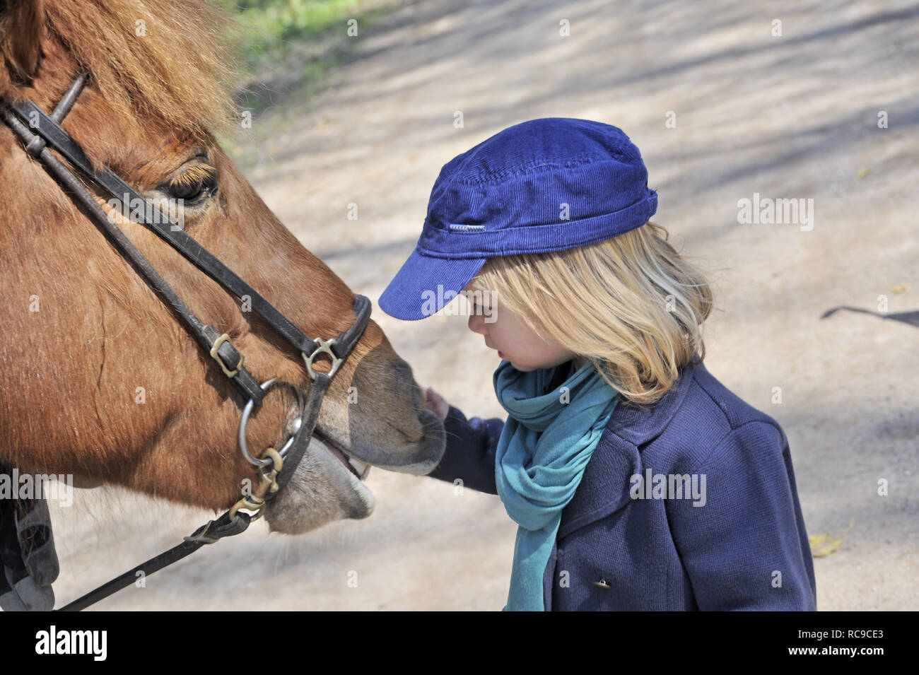 kleines Kind streichelt Pferd, 2 Jahre alt | little child strokes horse, 2 years old - Stock Image