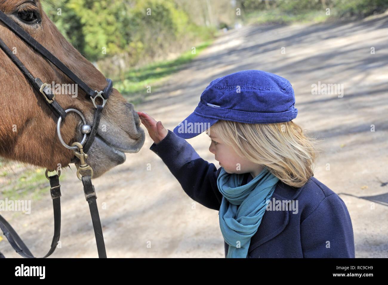 kleines Kind streichelt Pferd, 2 Jahre alt | little child strokes horse, 2 years old Stock Photo