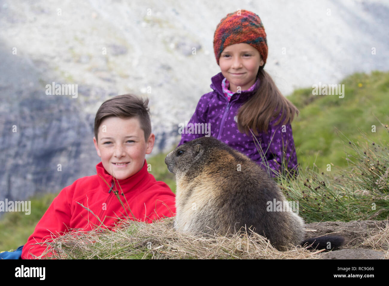 Two children looking at emerging Alpine marmot (Marmota marmota) in summer in the Alps - Stock Image