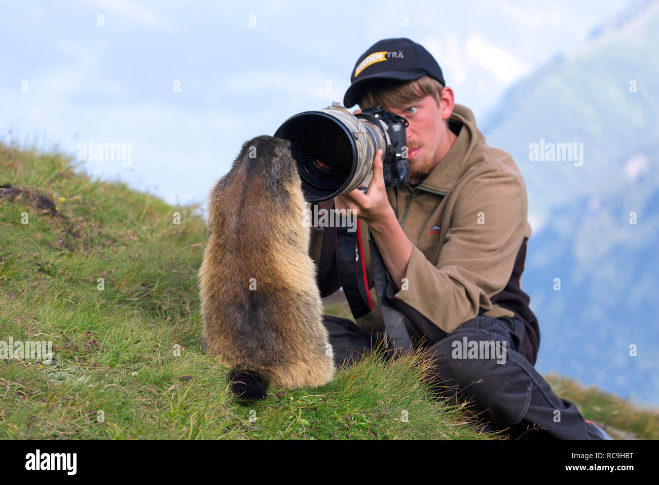 Wildlife photographer taking pictures of tame Alpine marmot (Marmota marmota) with long telephoto lens in summer in the Alps - Stock Image