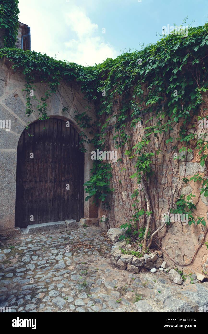 10 May 2018 Lluc Alcari, Majorca. Beautiful wooden door with green lianas. Selective focus - Stock Image