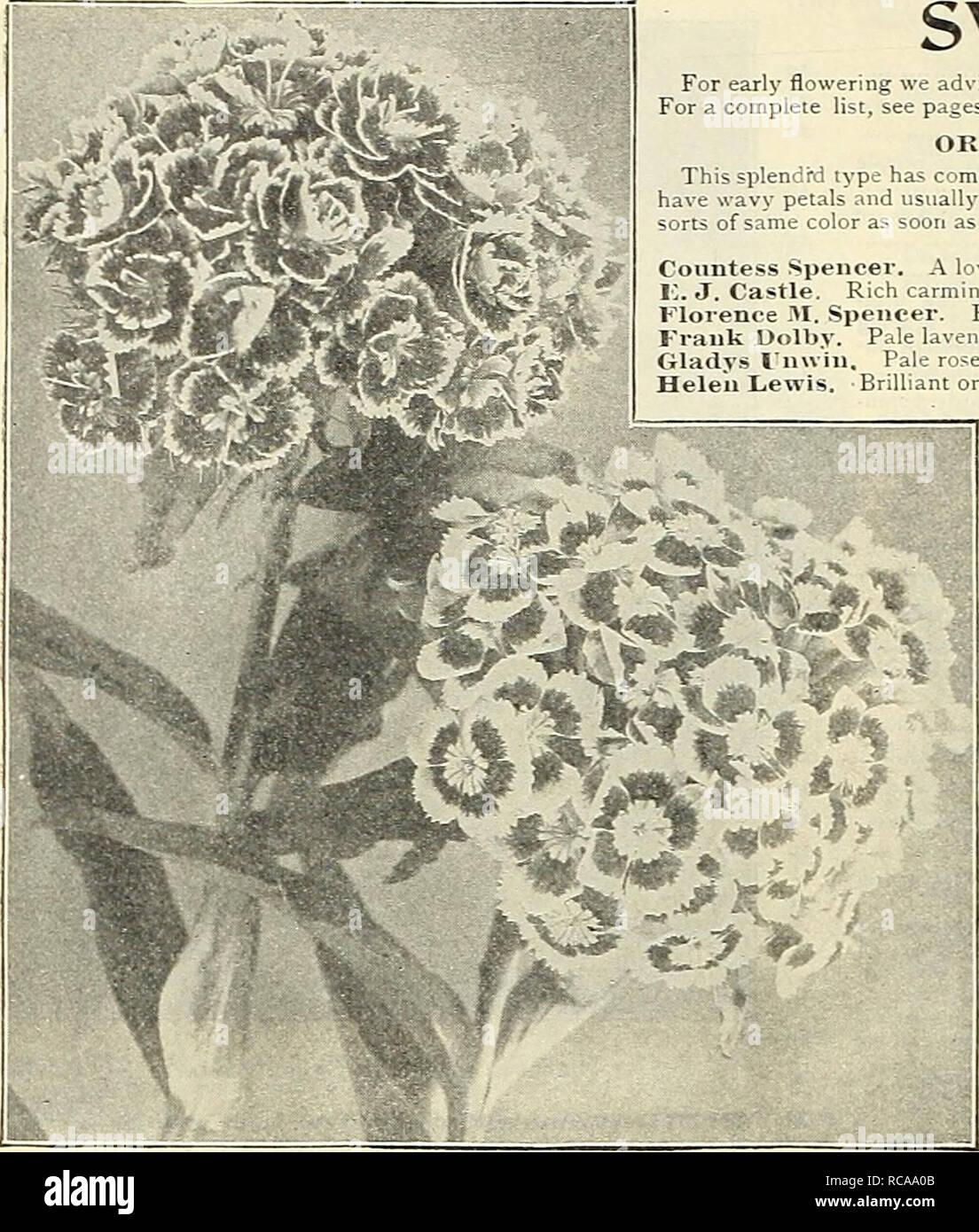 """. Dreer's 1908 autumn catalogue. Bulbs (Plants) Catalogs; Flowers Seeds Catalogs; Gardening Equipment and supplies Catalogs; Nurseries (Horticulture) Catalogs; Fruit Seeds Catalogs; Vegetables Seeds Catalogs. ro RTADRKR -PHIlAKLPHIAMlif RELIABLE FLOWERSEEDS. SWEET PEAS. For early flowering we advise autumn planting ; sow about the end of October in this latitude. For a complete list, see pages 78 and 120 of our Garden Book for 1908. OKCHID-T-LOWEKEO VARIKTIKS. This splendi""""d type has come to stay. They are distinguished for their ver^- large flowers which have wavy petals and usually born Stock Photo"""
