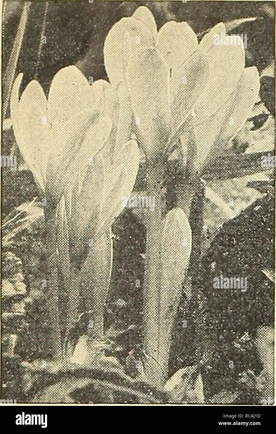 Dreer S Autumn Planting Guide For 1943 Bulbs Plants Catalogs