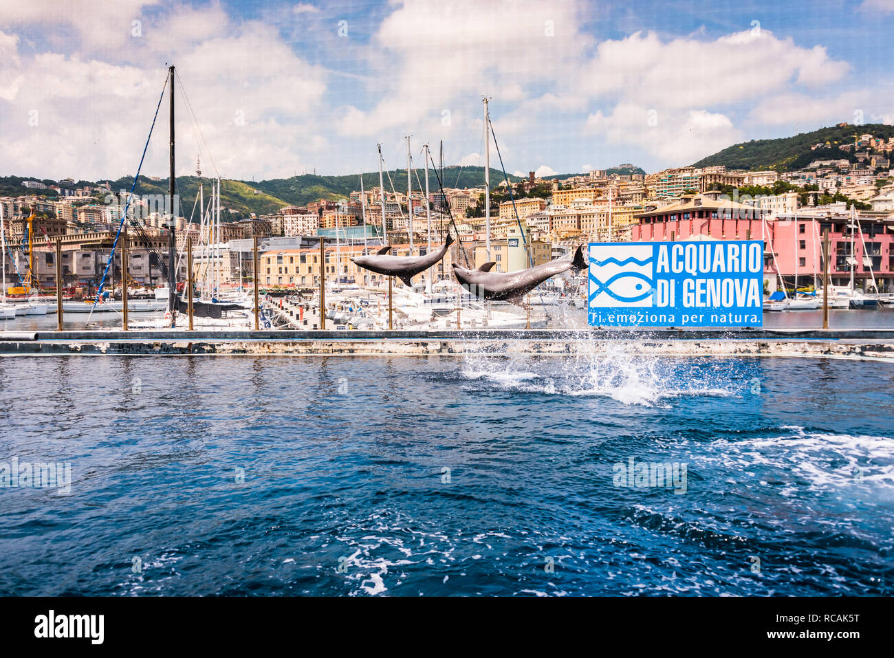 Bottlenose dolphin (Tursiops truncatus) Acquario di Genova, The largest Aquarium in Europe, Porto Antico (Genoa), Liguria, Italy, Europe - Stock Image