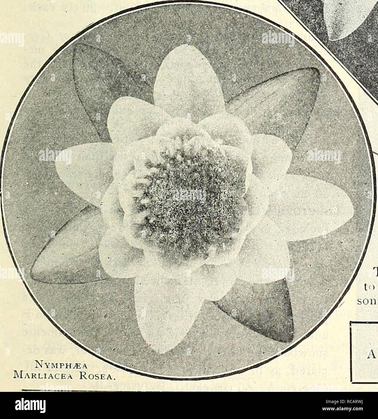 4a74c2daa57 Dreer's 1838 1908 garden book. Seeds Catalogs; Nursery stock Catalogs;  Gardening Equipment .