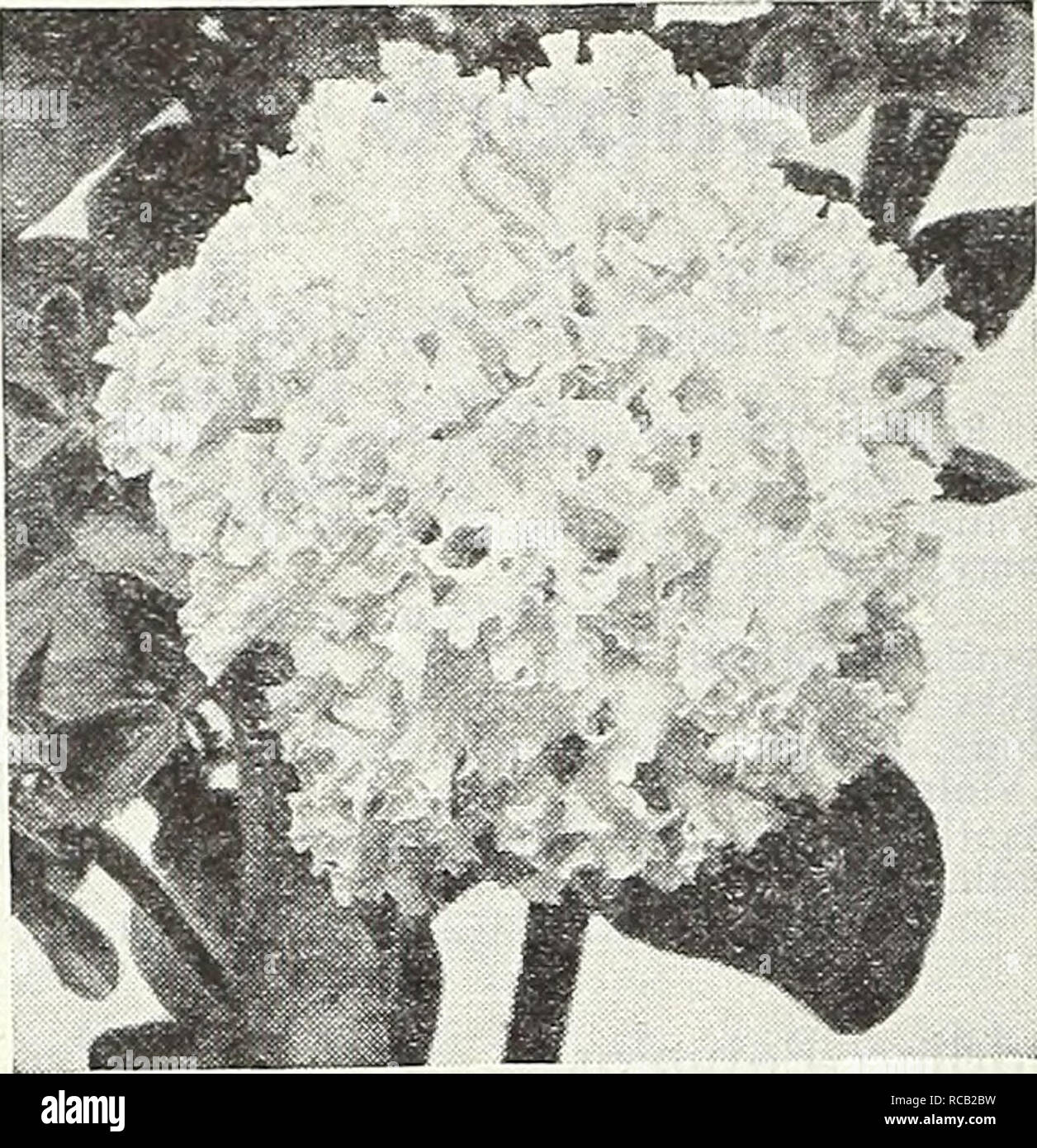 Dionne Monsanto (b. 1985),Marla Lukofsky Sex tube Debbie Lee Carrington,Jan Hunt