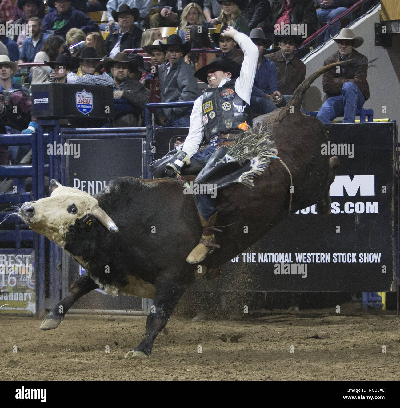 Denver, Colorado, USA. 14th Jan, 2019. Bull Rider TAYLOR TOVES of Stephenville, TX rides Pennywise during the 25th. Mexican Rodeo at the National Western Stock Show at the Denver Coliseum Monday evening. Credit: Hector Acevedo/ZUMA Wire/Alamy Live News - Stock Image