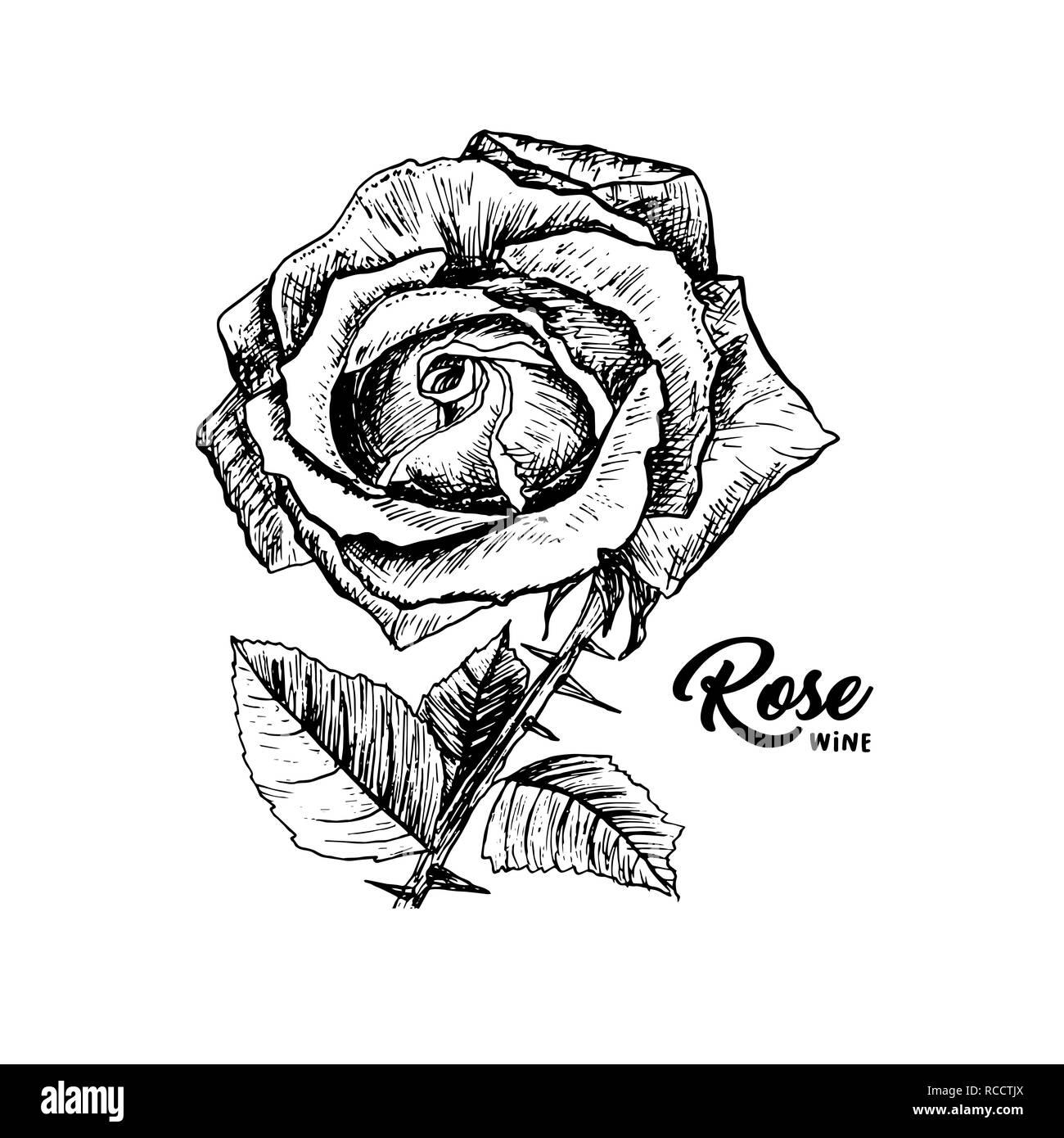 Rose Wine Flower Hand Drawn Vector Illustration Floral Ink Pen Clipart Black And White Realistic Rosebud Outline Drawing Rose Wine Sketch With Lettering Logo Emblem Label Isolated Design Element Stock Vector Image