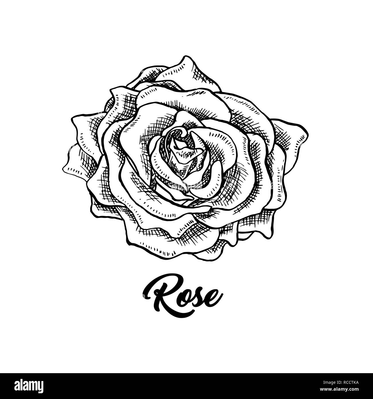 rose wine flower hand drawn vector illustration floral ink pen clipart black and white realistic rosebud outline drawing rose wine sketch with lettering logo emblem label isolated design element stock vector image https www alamy com rose wine flower hand drawn vector illustration floral ink pen clipart black and white realistic rosebud outline drawing rose wine sketch with lettering logo emblem label isolated design element image231393438 html