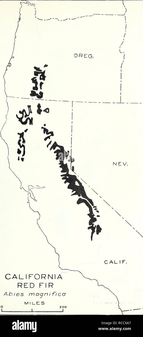 """. The distribution of important forest trees of the United States. Forests and forestry; Trees. 51. """"U ) / IDAHO CALIFORNIA RED FIR Ab/es mognifica m i l_e: s • 200 1 1 1 H N  N / I """"^ 1: ABIES MAGNIFICA A. MURRAY Map 47 CALIFORNIA RED FIR. Please note that these images are extracted from scanned page images that may have been digitally enhanced for readability - coloration and appearance of these illustrations may not perfectly resemble the original work.. Munns, E. N. (Edward Norfolk), 1889-1972. Washington, D. C. : U. S. Dept. of Agriculture - Stock Image"""