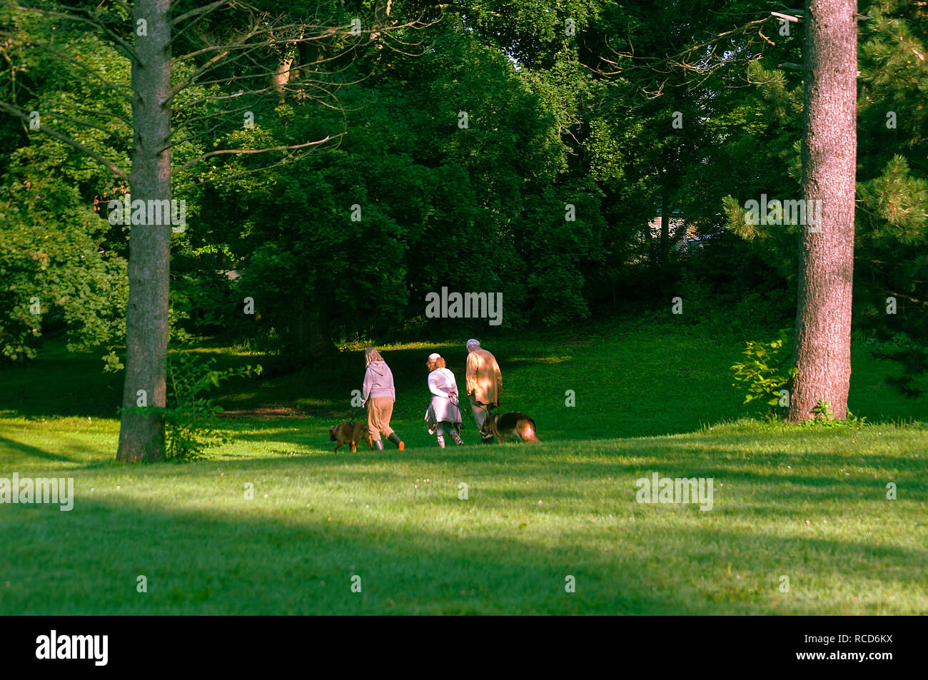 Two mature women and a man with their dogs in a park, Ontario, Canada - Stock Image