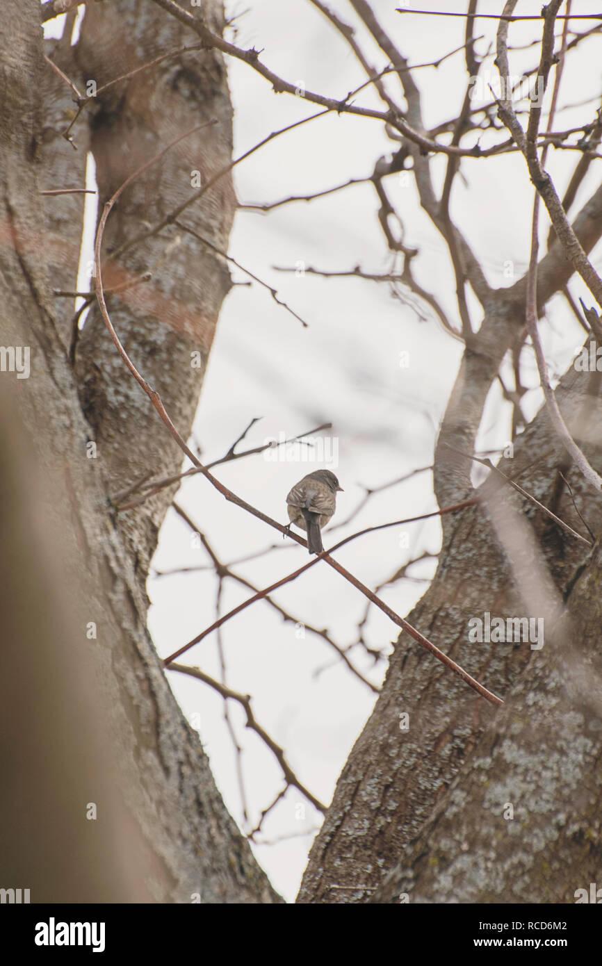 Bird in trees - Stock Image
