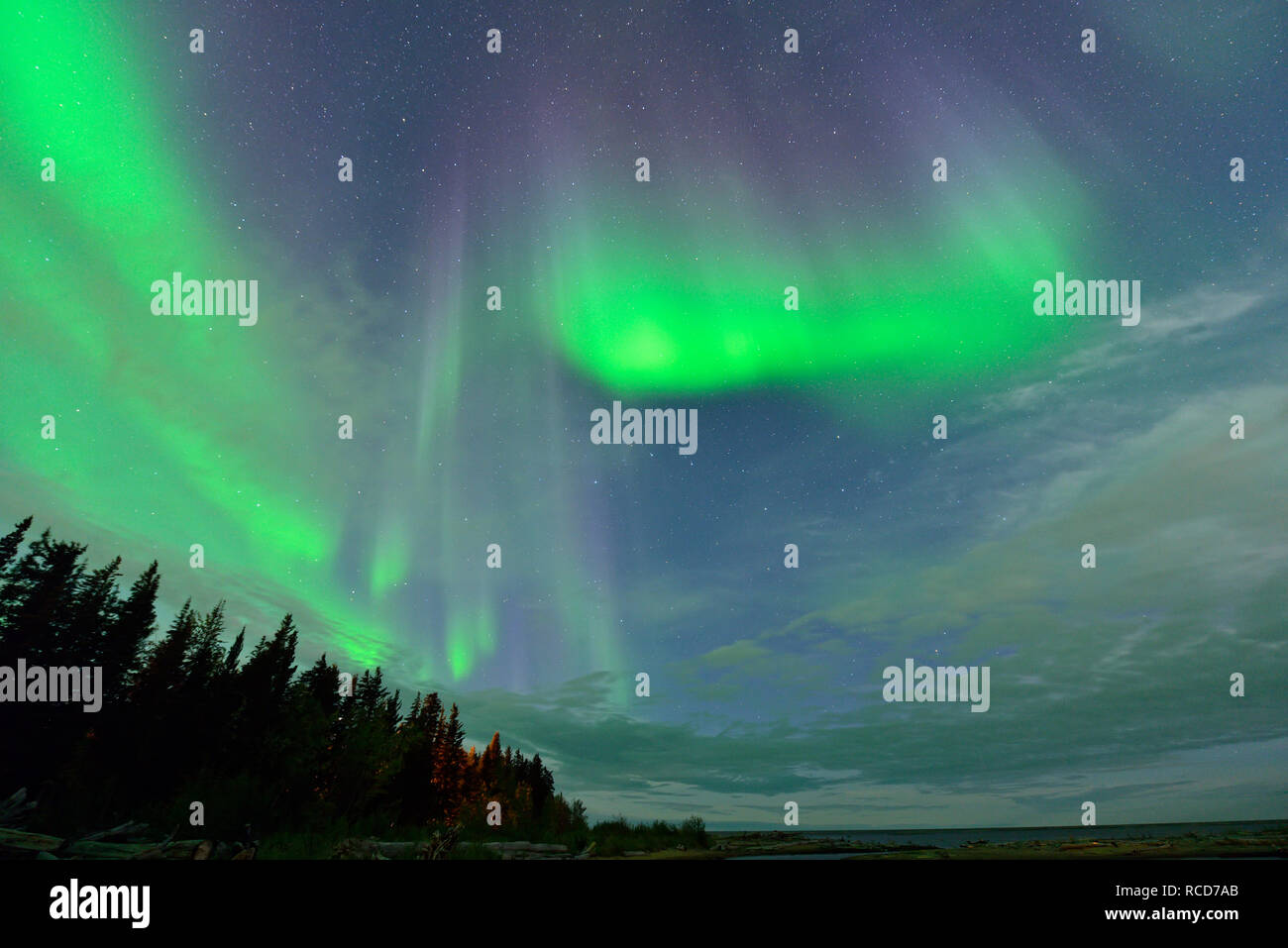 Aurora borealis (Northern Lights) over spruces near Great Slave Lake, Hay River, Northwest Territories, Canada - Stock Image