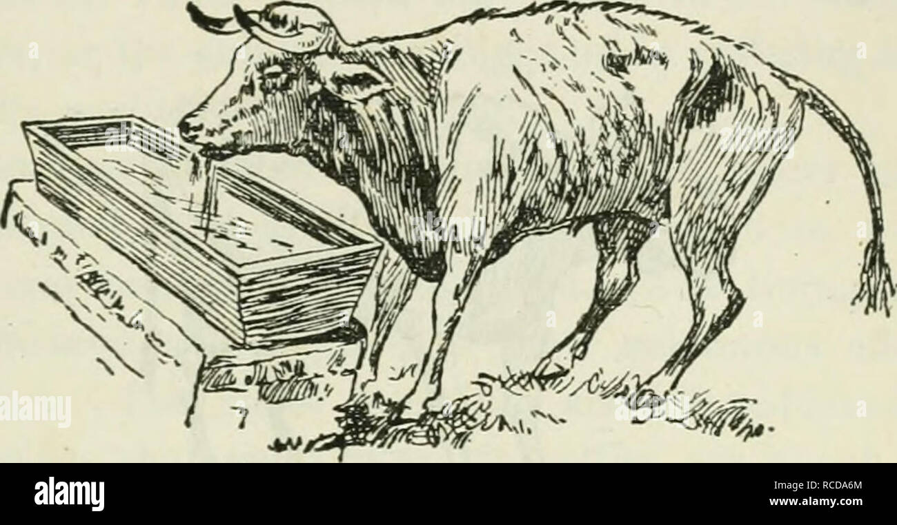The diseases and disorders of the ox, with some account of