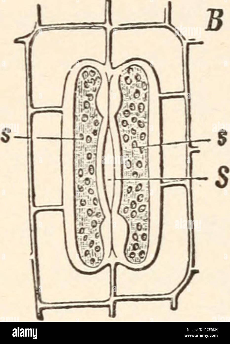 Elements of plant anatomy